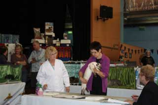 show judging