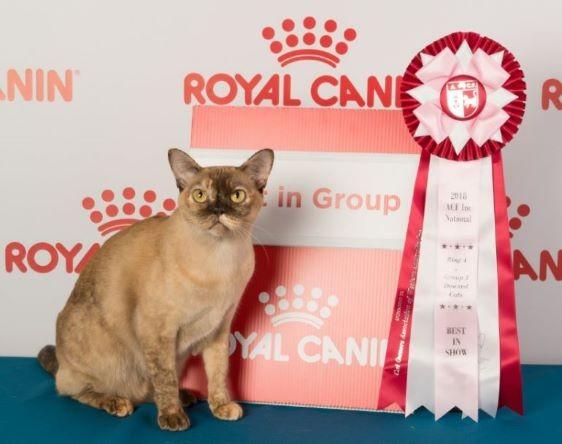 Kittykatz Calamity Jane