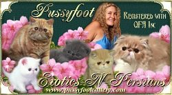 Pussyfoot Exotic Shorthairs & Persians